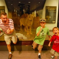 Visit the Man-Eating Lions of Tsavo & Mfuwe in Chicago!