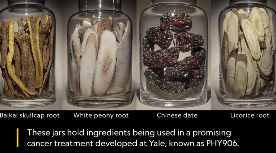 Acupuncture for cancer - Baikal skullcap root, white peony root, Chinese date and licorice root