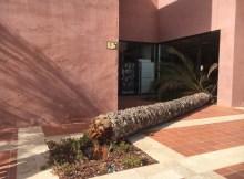 Fallen Palm Tree at Al Kasar