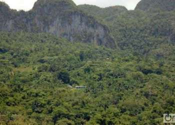 """In the Sierra del Infierno mountains in Pinar del Rio there are only two """"acuatic"""" families left Foto: Ronald Suárez"""