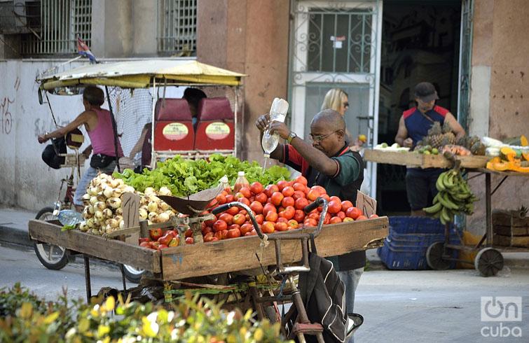 Un vendedor trata de conservar las verduras y hortalizas frescas. Foto: Otmaro Rodríguez.Un vendedor trata de conservar las verduras y hortalizas frescas. Foto: Otmaro Rodríguez.