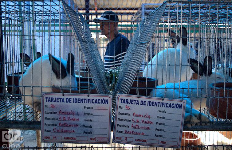 Cada especie tiene una tarjeta descriptiva con su descripción. Foto: Otmaro Rodríguez.