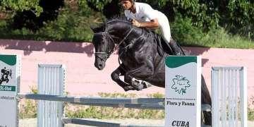 Remate Élite Internacional de caballos de salto