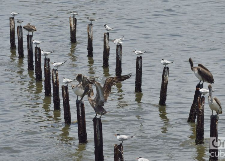 La erosión del mar y la falta de recursos han llevado a la pérdida del muelle. Foto: Otmaro Rodríguez.