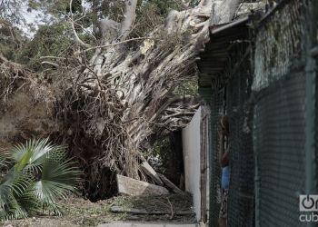 El huracán Irma descargó su furia contra los árboles. Foto: Claudio Pelaez Sordo.