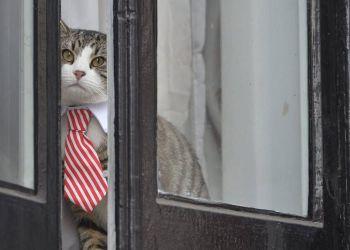 El gato de Julian Assange en una de las ventanas de la Embajada de Ecuador en Londres. Foto: EFE.