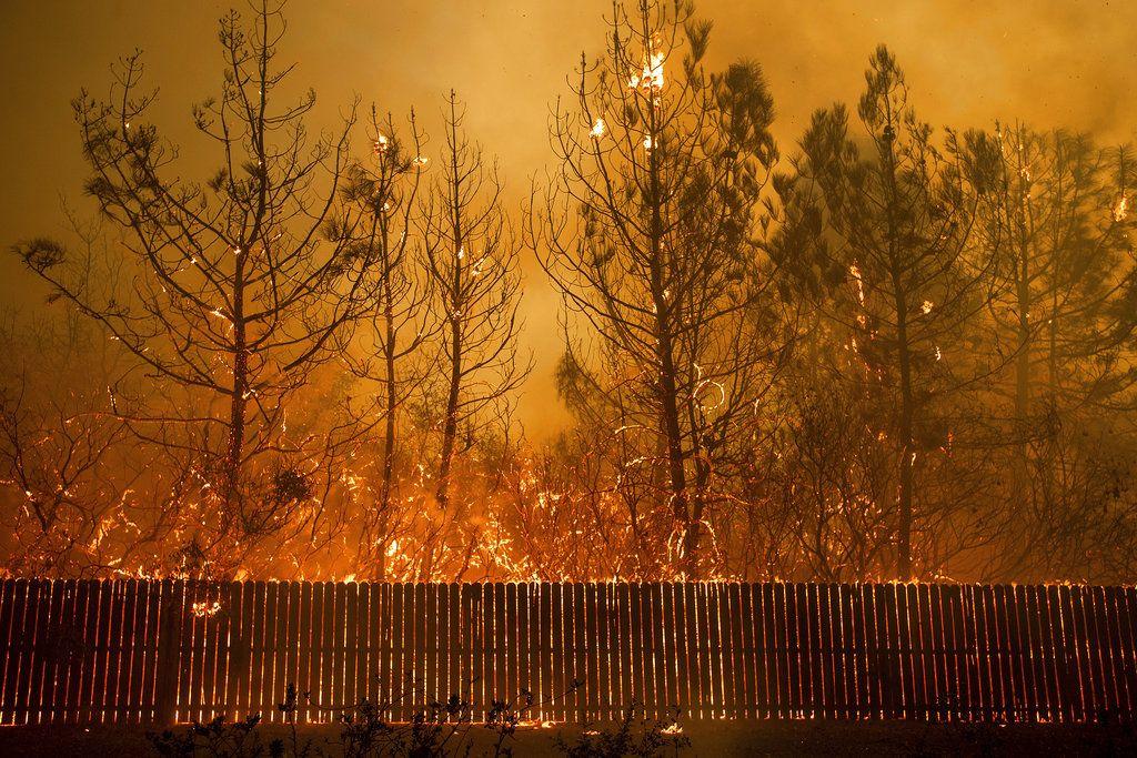Las llamas llegan a lo alto de los árboles en Paradise, California, el 8 de noviembre de 2018. Un nuevo informe federal advierte que ese tipo de desastres climáticos extremos están empeorando en Estados Unidos. (AP Foto/Noah Berger.)