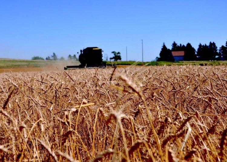 Cosecha de trigo en Dakota del Norte, Estados Unidos. Foto: pixabay.com