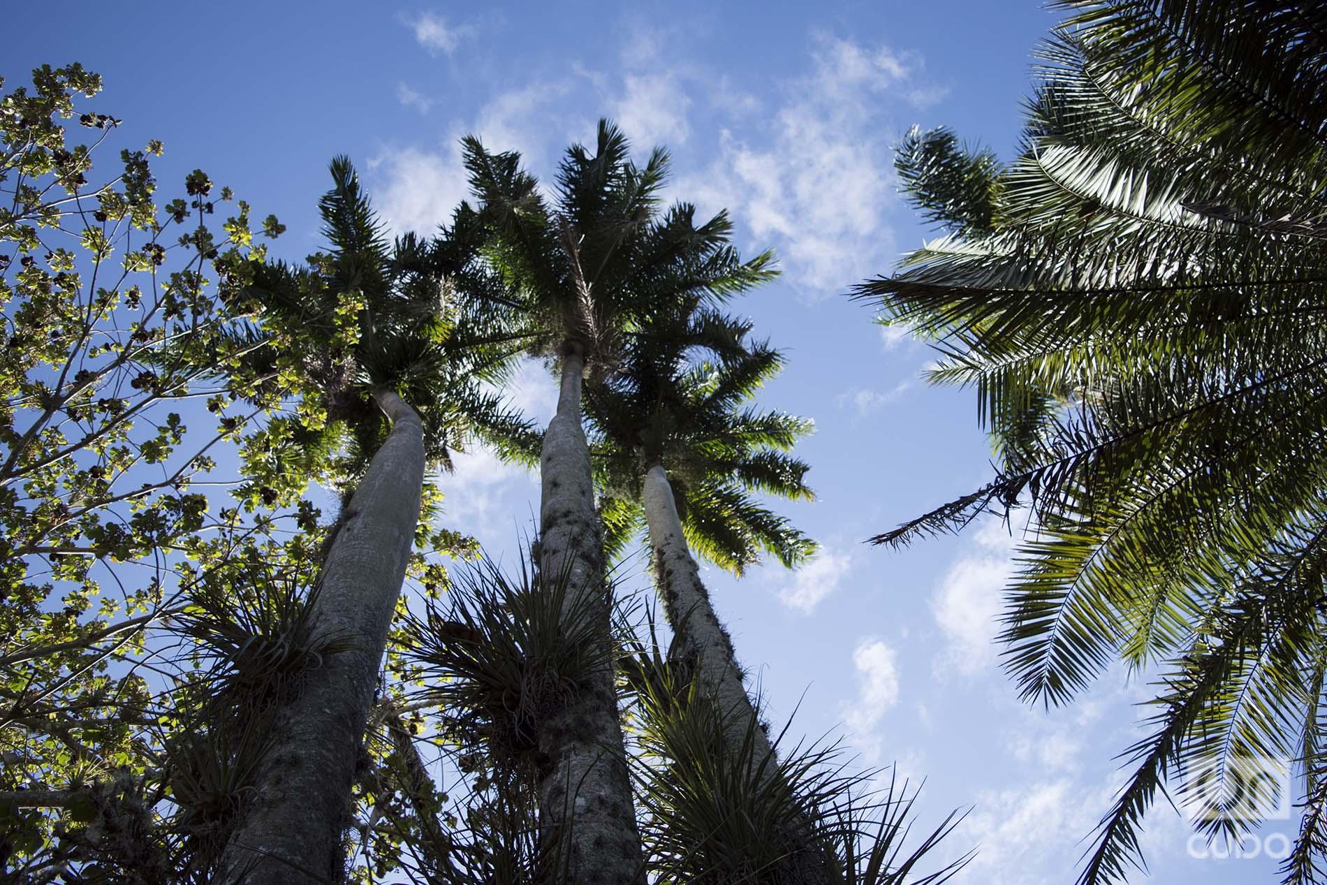 Jardín Botánico de Cienfuegos. Foto: Otmaro Rodríguez.