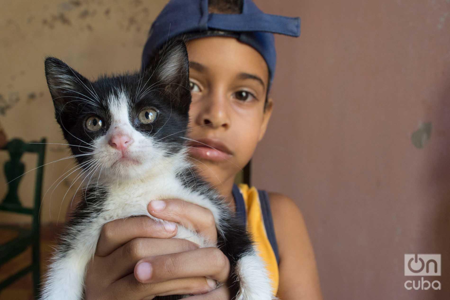 Niño en el refugio de gatos de Lis Núñez en Guanabacoa. Foto: Otmaro Rodríguez.