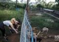 Refugio de perros de Venus y Ernesto en Mulgoba, al oeste de La Habana. Foto: Otmaro Rodríguez.