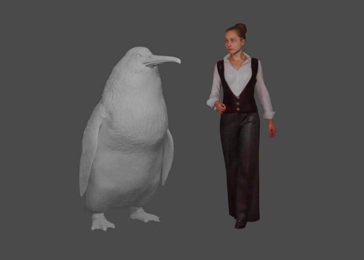 """Esta ilustración del Museo de Canterbury muestra la altura aproximada de un pingüino gigante """"crossvallia waiparensis"""" junto a un ser humano. Los científicos de Nueva Zelanda dicen que han encontrado huesos fosilizados de un pingüino gigante extinto del tamaño de un ser humano y que nadó en los océanos hace unos 60 millones de años. Foto: Museo de Canterbury vía AP."""