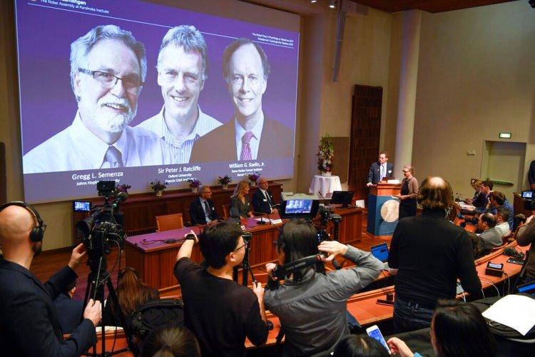 Thomas Perlmann, a la derecha, secretario general del Comité del Nobel, anuncia los ganadores de 2019 del Nobel de Medicina durante una conferencia de prensa en Estocolmo, Suecia, el lunes 7 de octubre de 2019. (Pontus Lundahl/TT via AP)