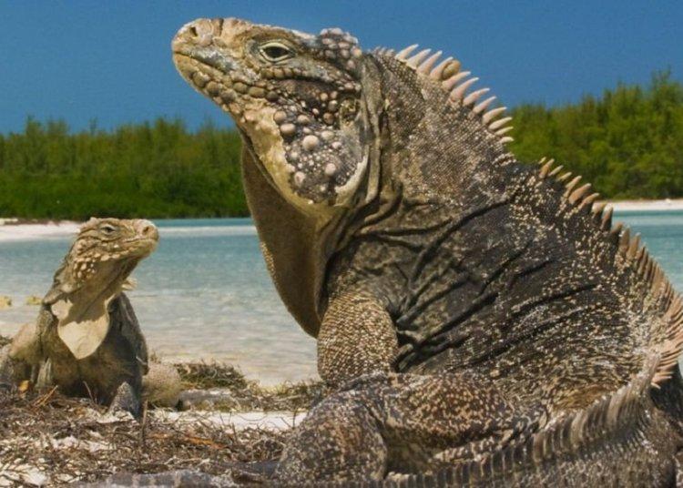 Fotograma del programa Wild Cuba: A Caribbean Journey, BBC Two.