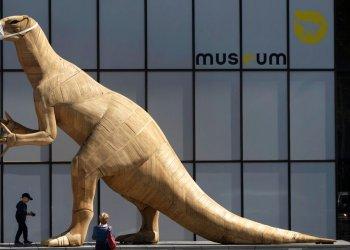 Un niño camina frente a una escultura de dinosaurio con una máscara en el Museo de Historia Natural de Bruselas, el martes 19 de mayo de 2020. Los museos han reabierto dudosos  a medida que se relajan las medidas de confinamiento por el coronavirus, pero los expertos señalan que uno de cada ocho museos podría cerrar permanentemente por la pandemia. Foto: Virginia Mayo/ AP