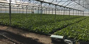 Curso de Agricultura Ecológica para emprendedores