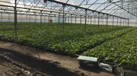 El Parque Agrario contará con innovación tecnológica del Proyecto Agrogestor