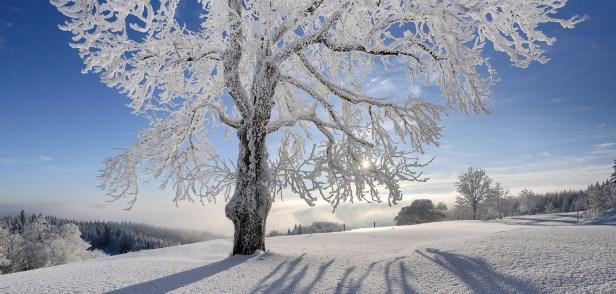 albero-nevoso,-paesaggio-innevato-218004_edited.jpg