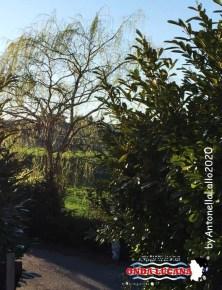 Immagine tratta da repertorio di Onda Lucana®by Antonella Lallo 2020. cv