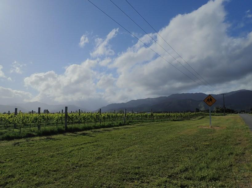 vignes montagnes nuage nouvelle-zelande