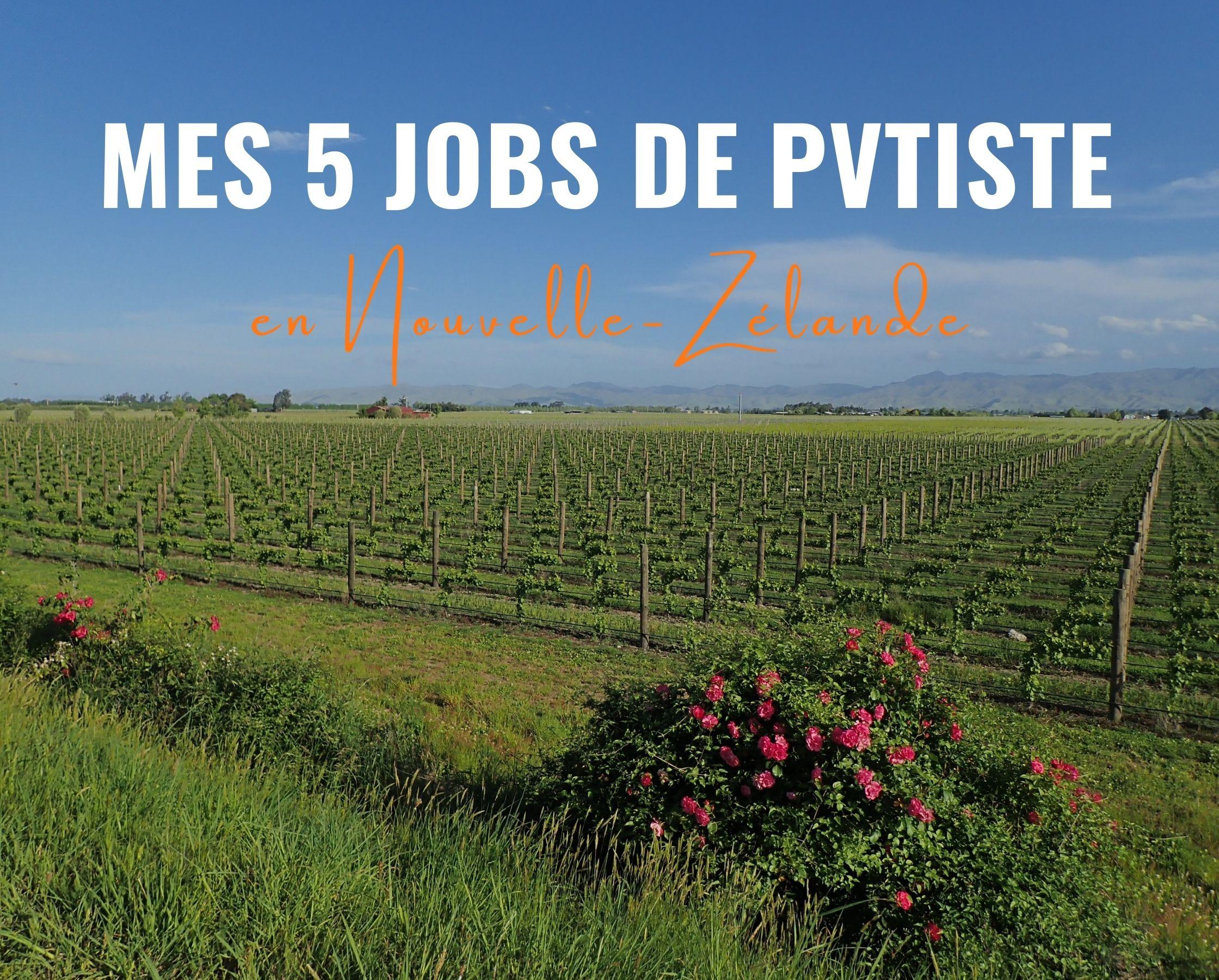 Mes 5 jobs de PVTiste en Nouvelle-Zélande