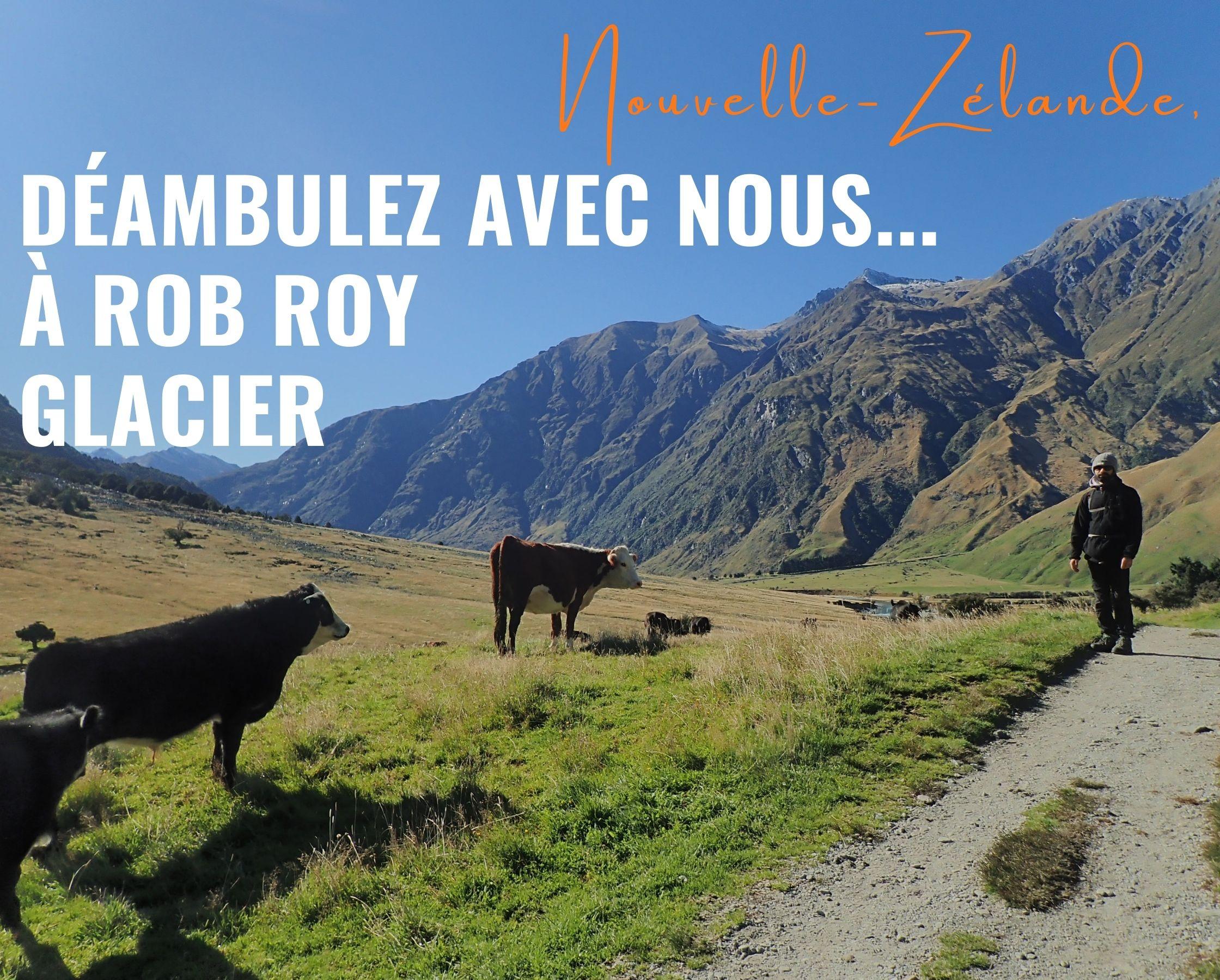 Déambulez avec nous…à Rob Roy Glacier