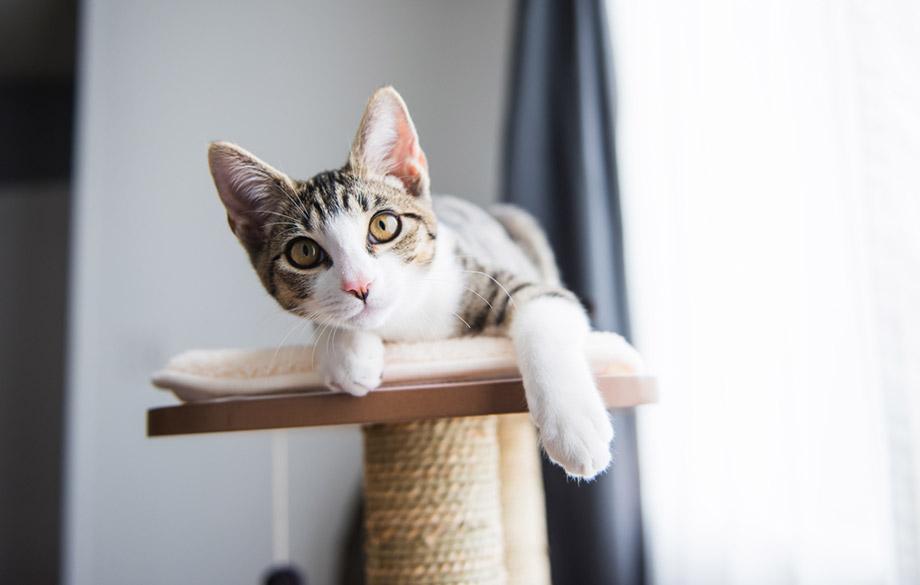 fit cat