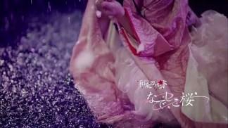 なでしこ桜.mp4_snapshot_00.04_[2016.03.21_23.48.57]