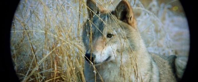 Wolf.Totem.2015.720p.BRRip.1GB.MkvCage.mkv_snapshot_00.14.42_[2016.04.05_20.48.05]