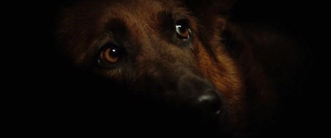 Wolf.Totem.2015.720p.BRRip.1GB.MkvCage.mkv_snapshot_00.30.31_[2016.04.05_21.10.40]