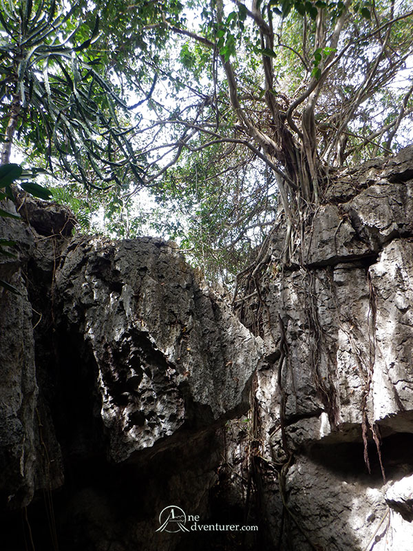 bayukbok cave forest above