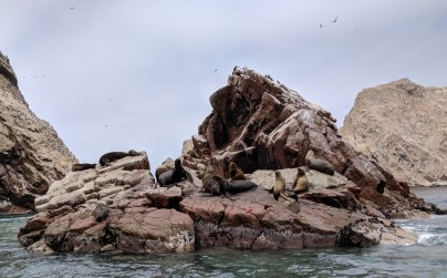 Sea Lions-Islas Ballestas-Paracas, Peru
