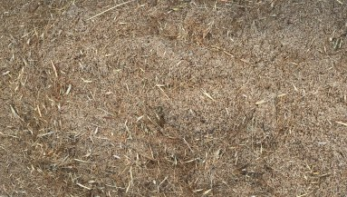 Grass seed mixed with sand