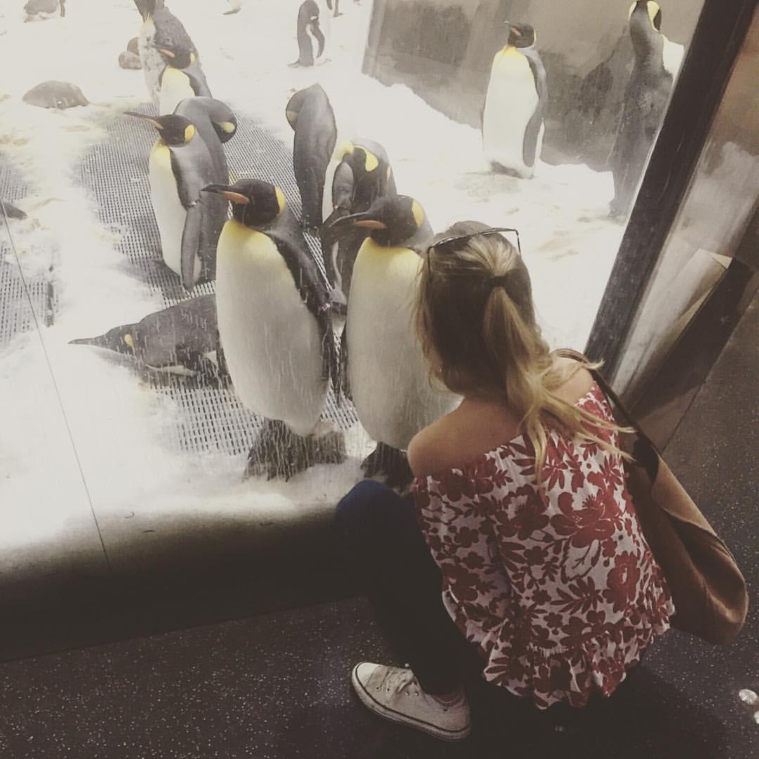 Penguins at Melbourne Aquarium