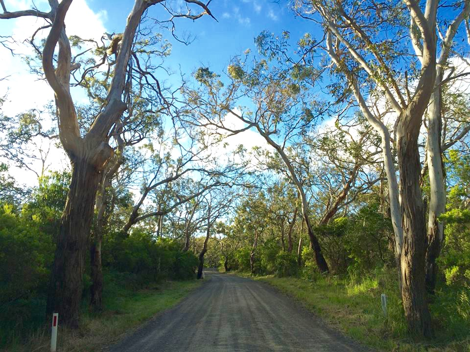 Driveway to Bimbi Park, Australia
