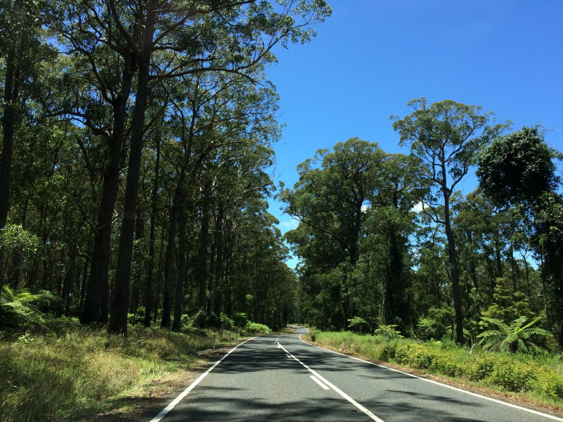 Driving Along Waterfall Way, Australia