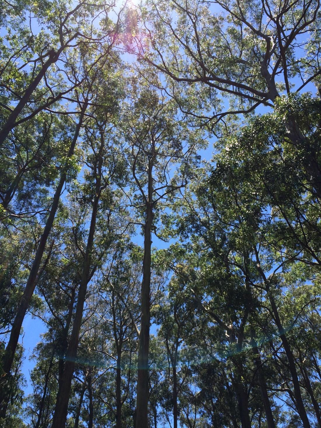 Foliage Along Waterfall Way, Australia