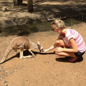 Kangaroo Feeding at Currumbin Wildlife Sanctuary