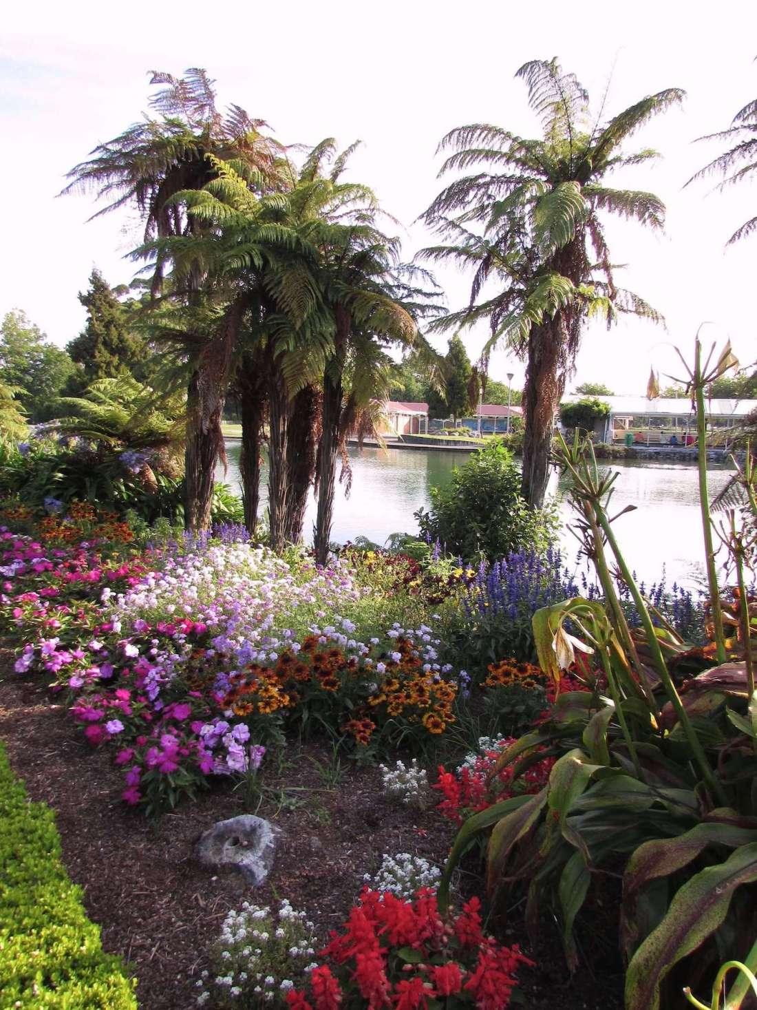 Blooming flowerbeds in Rotorua