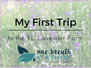 My First Trip to the Young Living Lavender Farm