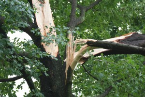 tree damaged by storm