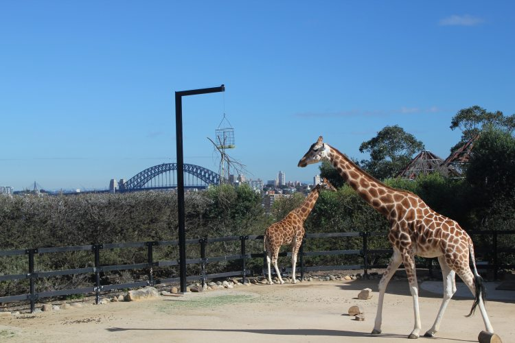 Sydney Views | Sydney Taronga Zoo
