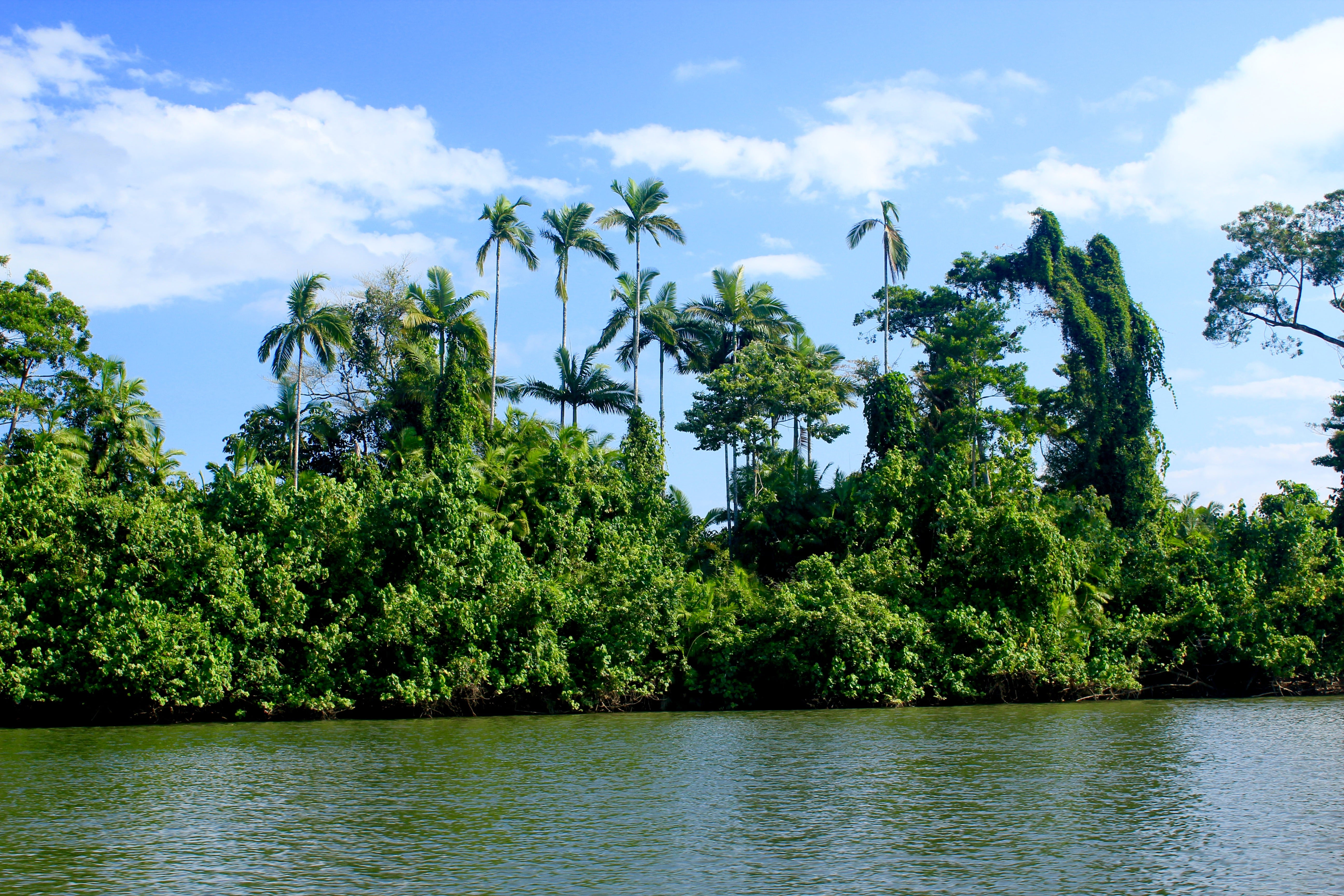 The Cairns Tour You DON'T Want to Book   Cape Tribulation and Daintree Rainforest