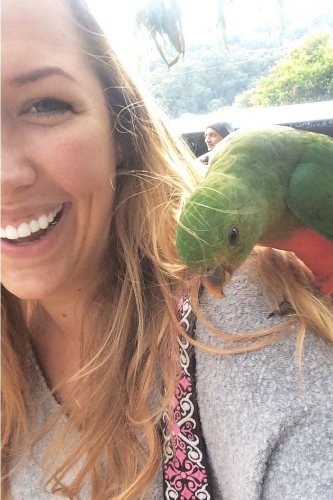 parrots on the great ocean road