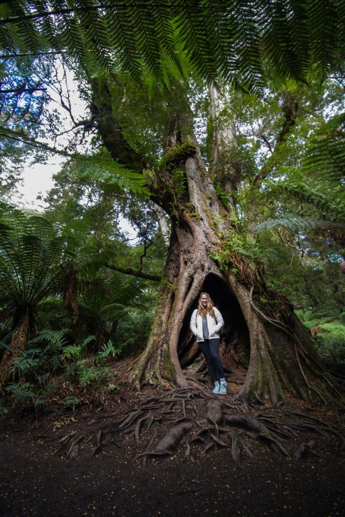 Great Otway National Park standing inside tree