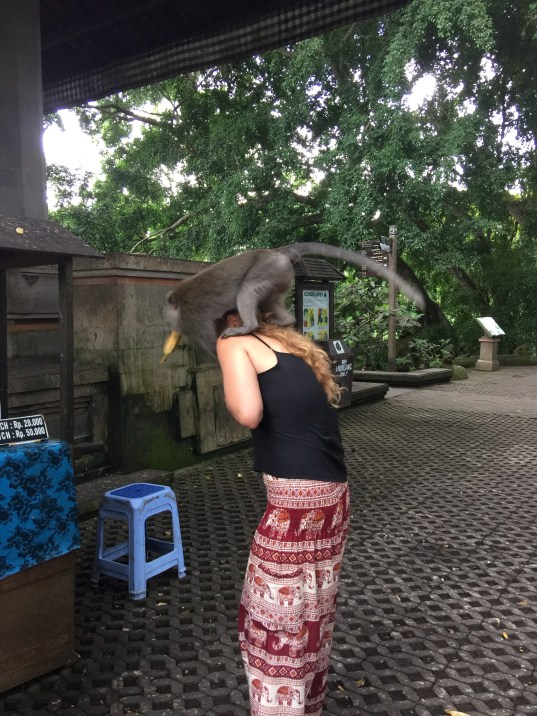 Memoirs from the Monkey Forest   Bali, Indonesia Must Do