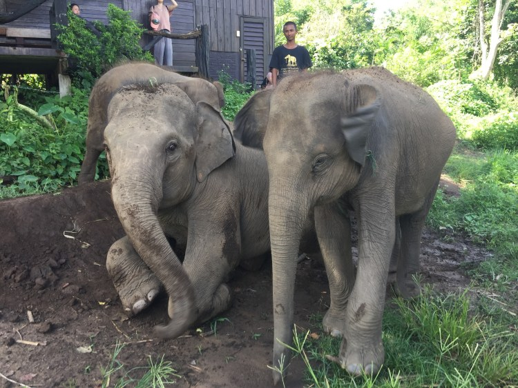 Seeing Elephants in Thailand the Right Way: Responsible Animal Tourism | CHIANG MAI, THAILAND