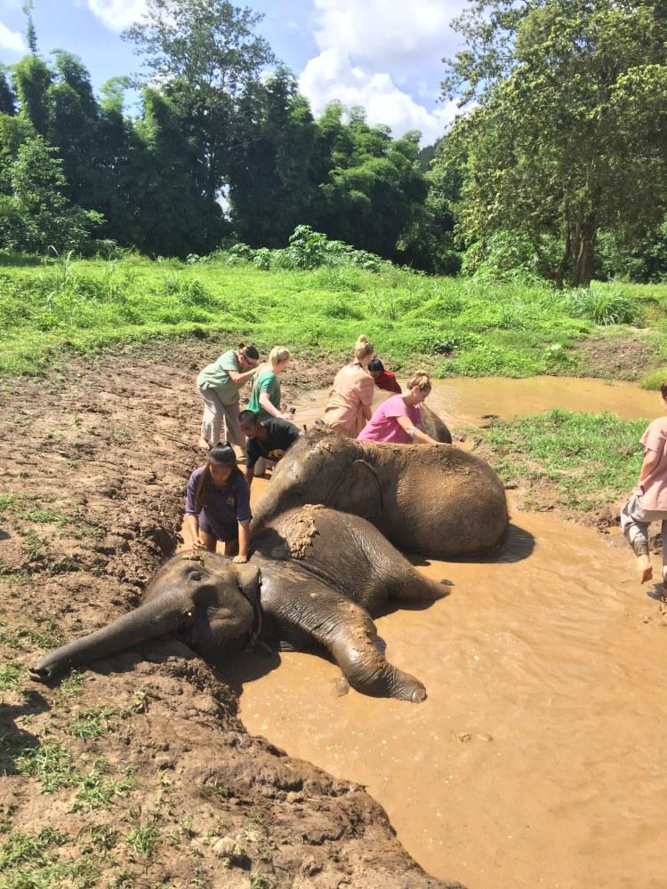 Giving elephants a mud bath - See Elephants Responsibly