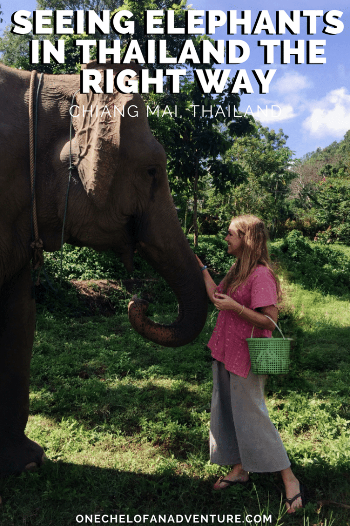 See Elephants Responsibly at Ran-Tong: Save & Rescue Elephant Center