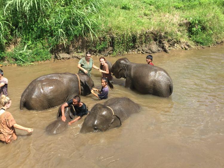 getting to swim with elephants